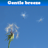 Gentle breeze 5 Differenc...